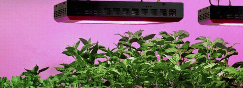 come coltivare piante con led