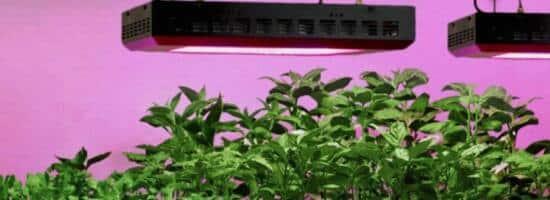 Lampade A Led Per Coltivazione Indoor.Come Coltivare Piante Con Lampade Led Cosa Sono E Come