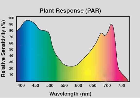 par spettro luminoso fotosintesi