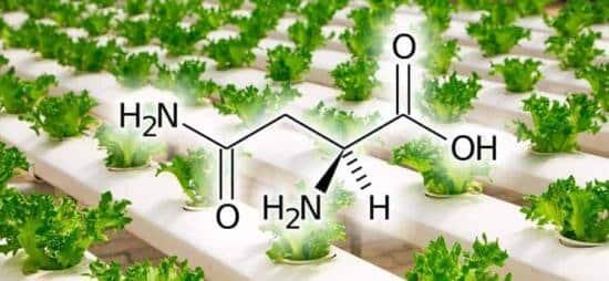 Aminoacidi coltivazione idroponica