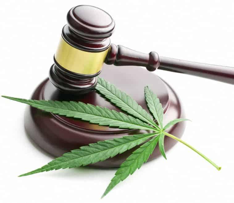 assoluzione cannabis light