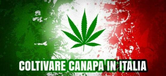 coltivare canapa legale italia