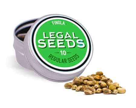 semi legali di finola cannabis light