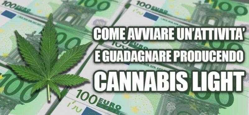 cannabis light come guadagnare
