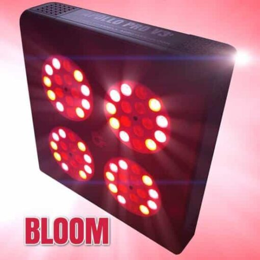 apollo v3 bloom