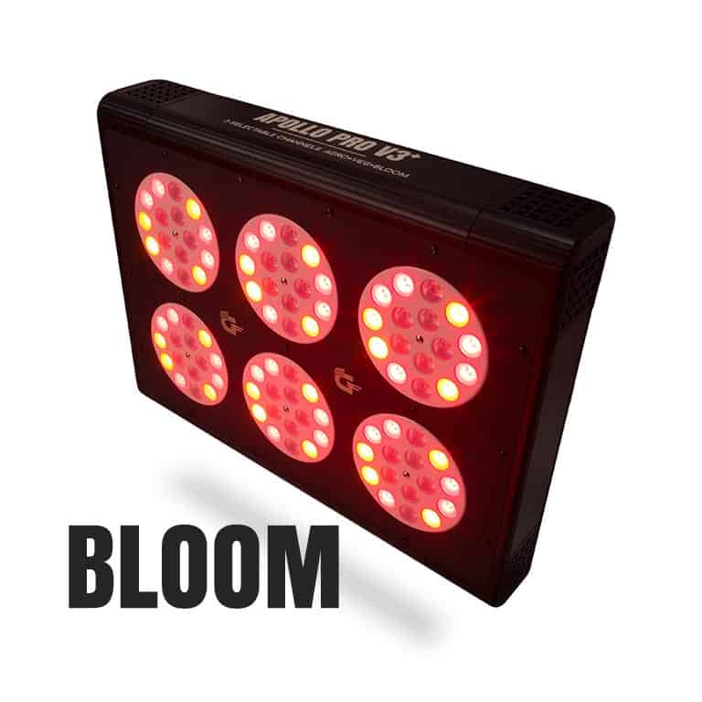 apollo v3 288 watt bloom