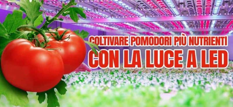 coltivare pomodori indoor con luce led