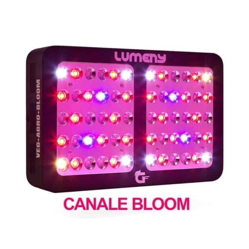 lumeny-600 watt canale bloom