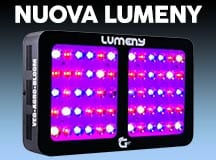 lumeny bloom booster