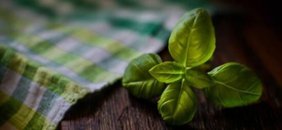 Coltivare erbe aromatiche indoor