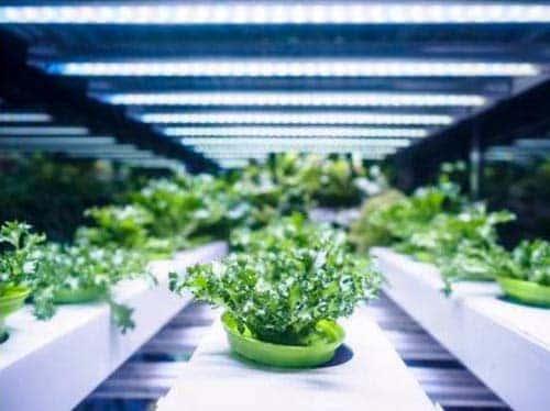 pianta coltivata con lampada idroponica