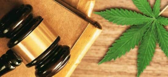 Assoluzione per la sentenza sulla cannabis light