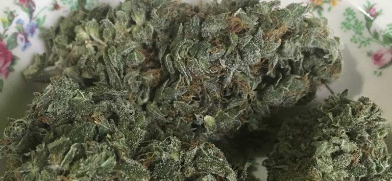 La coltivazione casalinga di cannabis è legale